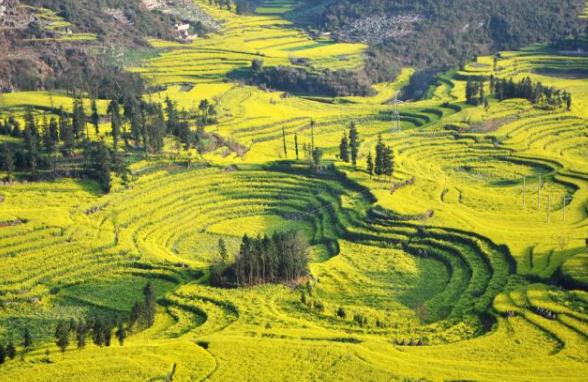 云南旅游必去的景点