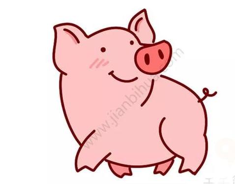 豬的簡筆畫