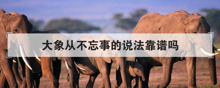 大象从不忘事的说法靠谱吗