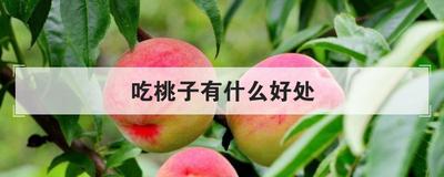 吃桃子有什么好處