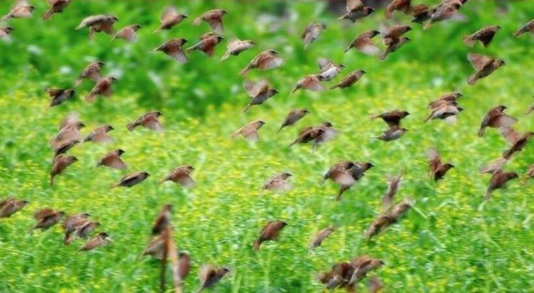草长莺飞什么意思