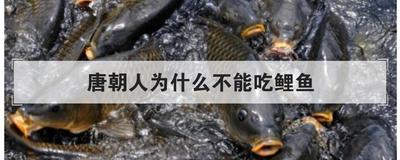 唐朝人為什么不能吃鯉魚