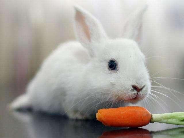 为什么说养兔子不吉利