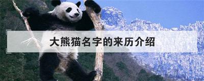 大熊猫名字的来历介绍