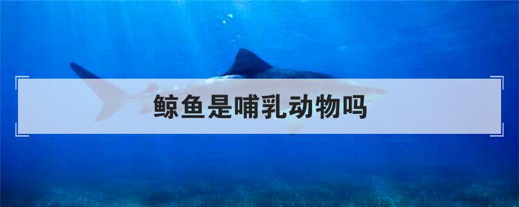 鯨魚是哺乳動物嗎