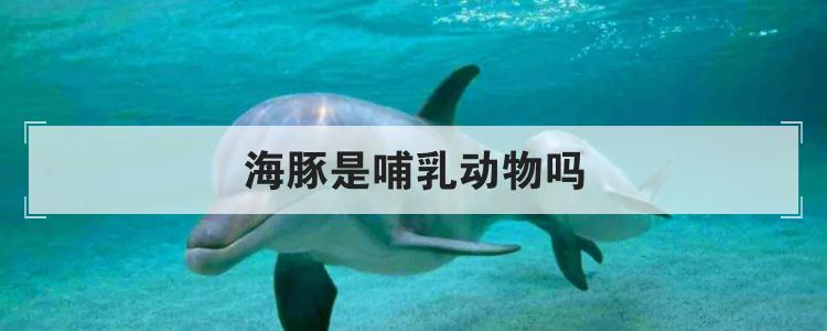 海豚是哺乳動物嗎