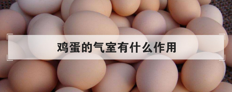 鸡蛋的气室有什么作用