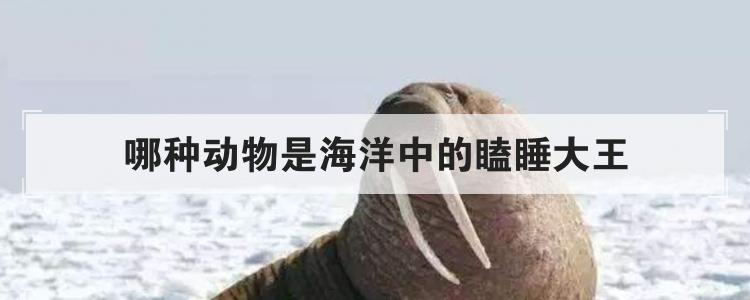 哪種動物是海洋中的瞌睡大王