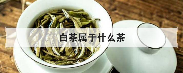 白茶屬于什么茶