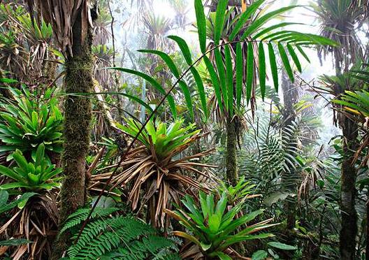 熱帶雨林氣候特點