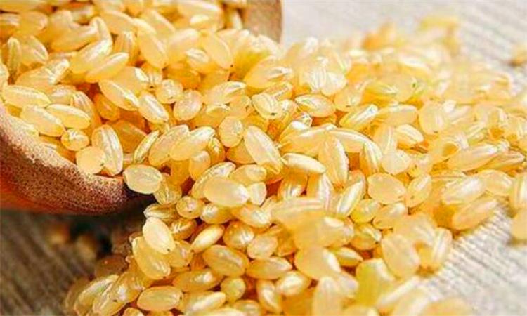 糙米是什么