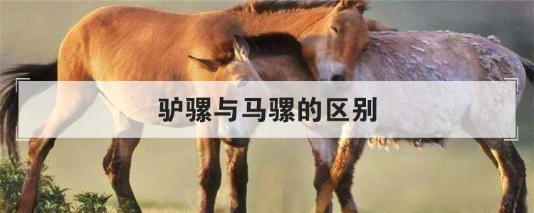 驴骡与马骡的区别
