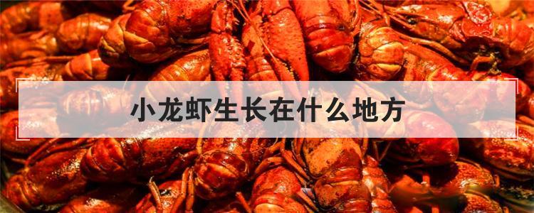 小龙虾生长在什么地方