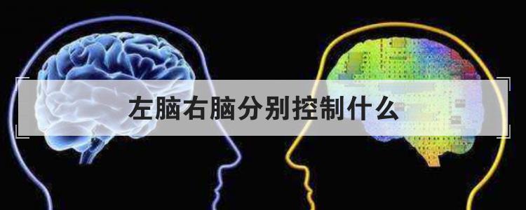 左脑右脑分别控制什么