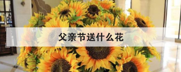 父亲节送什么花