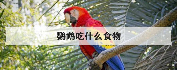 鹦鹉吃什么食物