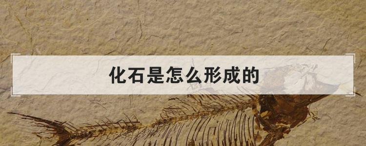 化石是怎么形成的