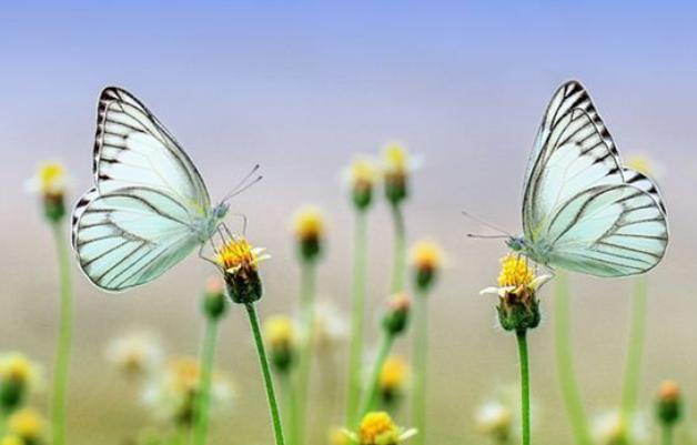 蝴蝶效应是指什么?