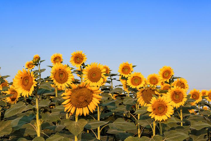 感恩节花束常用的花,不会送花的人有福了!