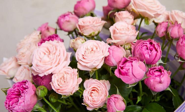 道歉送花送几朵比较适合?向女友道歉送花应该写些什么?