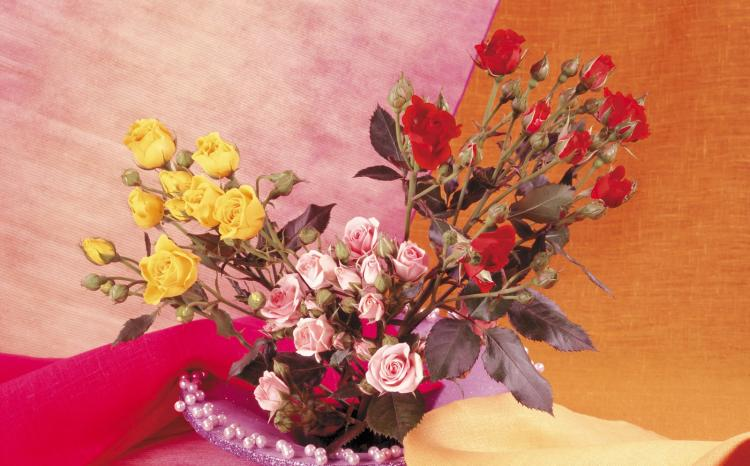 领导过生日能送花吗?送什么花好?