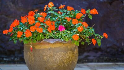 给领导送花之盆栽花卉篇