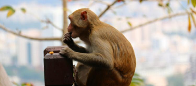 猴赛雷是什么意思