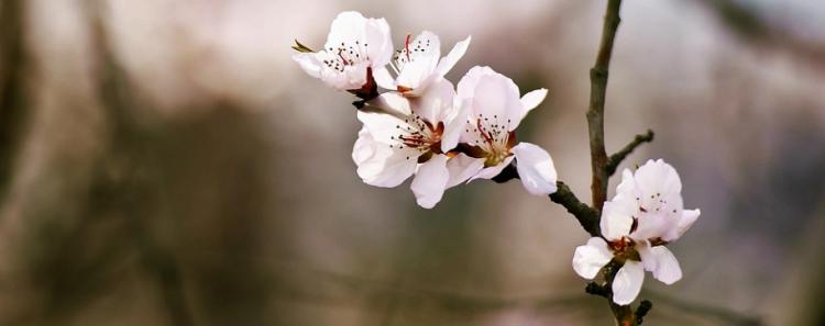 关于春风的诗句有哪些