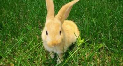 兔子不吃窝边草下一句话是什么