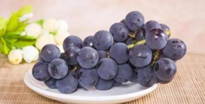 巨峰葡萄是什么品种
