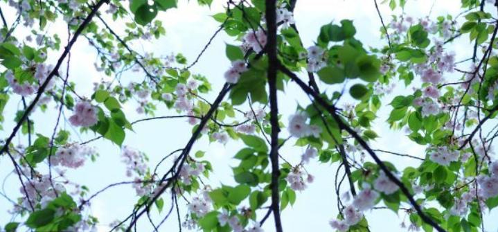 立春的含义是什么