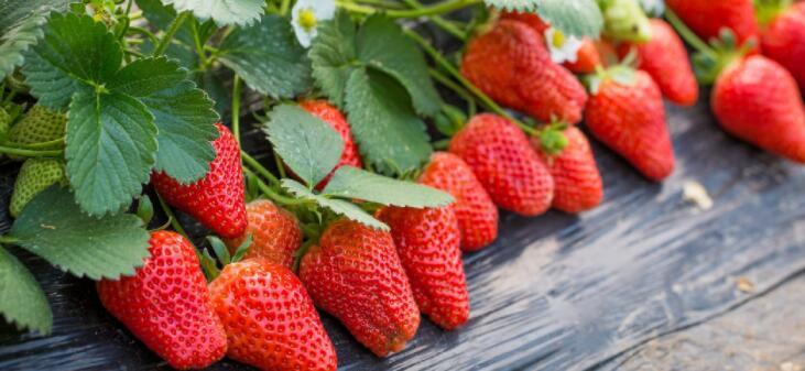 孕妇能吃草莓吗