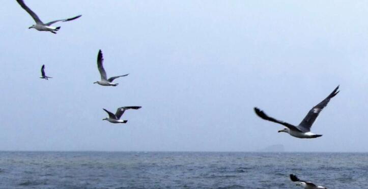 天高任鸟飞的意思是什么?