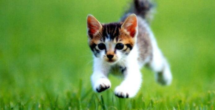 猫的习性有什么?