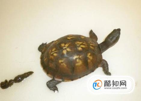乌龟冬眠怎么养