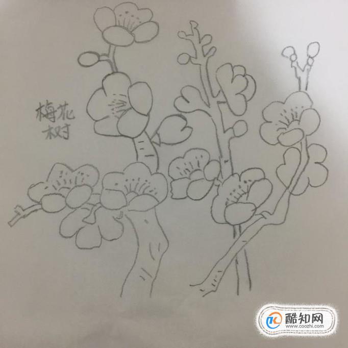 儿童简笔画之梅花树,梅花的简笔画画法步骤优质图片