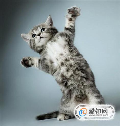 训练猫咪不咬人的方法_怎样训练猫咪听话_怎么训练猫咪不抓人