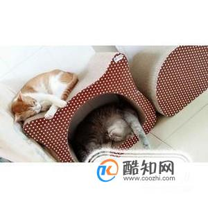 几个月的猫需要猫抓板图片