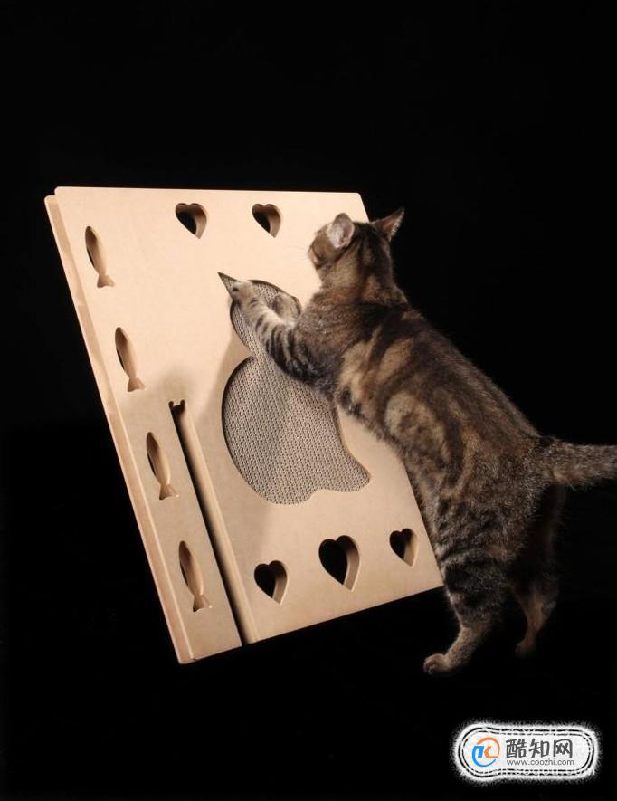 怎么教猫咪用猫抓板图片
