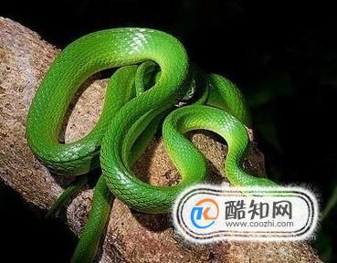 周公解梦 孕妇梦见小蛇的寓意优质