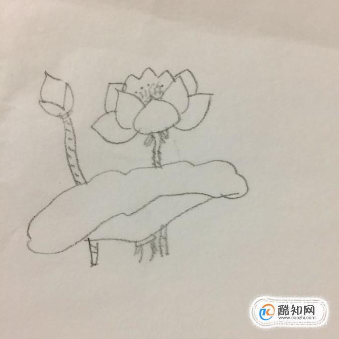 首先用铅笔在纸上画出一朵正在盛开的荷花,如下图所示。画这部分的时候可以把它想象成一个包子的形状,最后不要忘记在荷花当中画出花蕊。