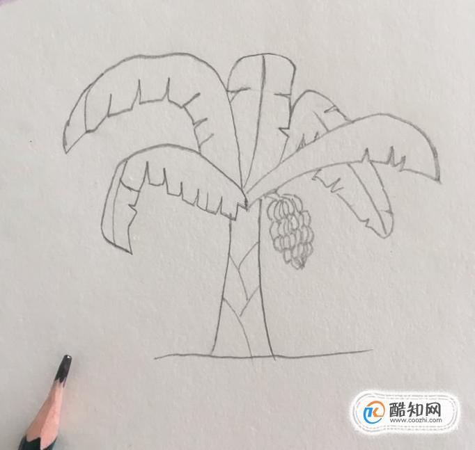 香蕉树简笔画步骤优质