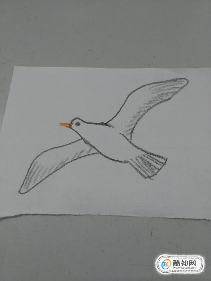 海鸥简笔画怎么画