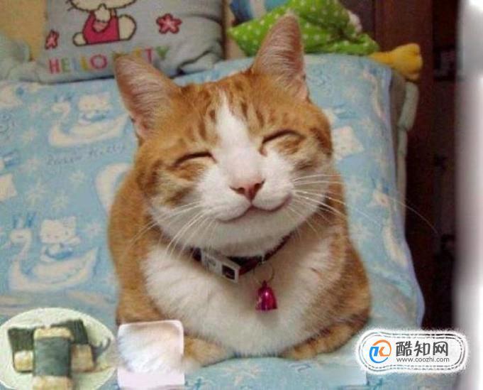 猫咪做绝育手术需要多少钱-传奇3私服