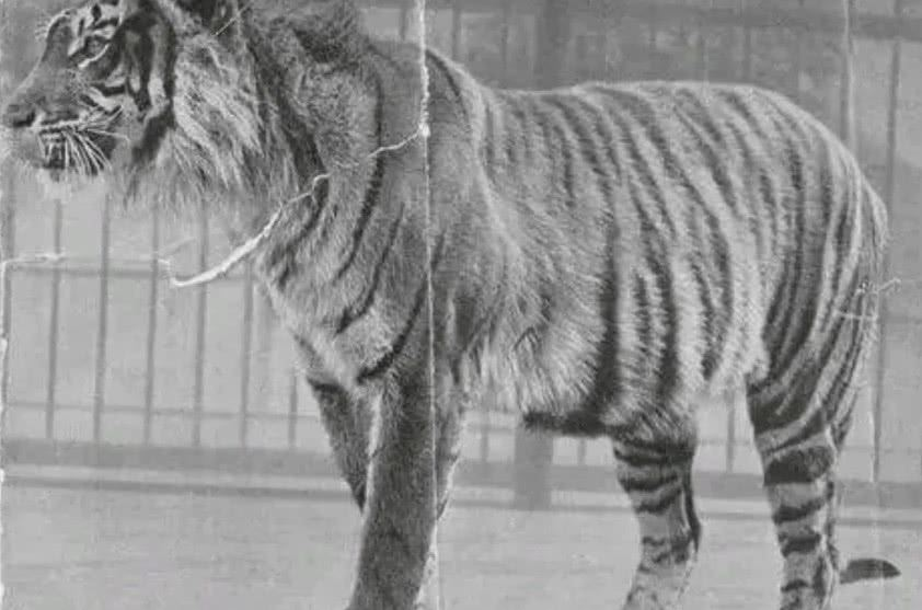 20世纪被人类灭绝的10种动物,近代已灭绝的动物图片