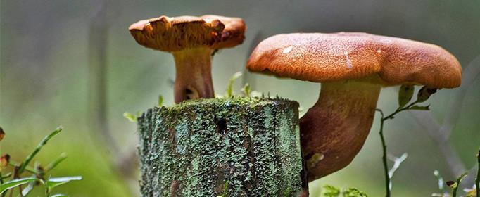 蘑菇是不是越贵越好