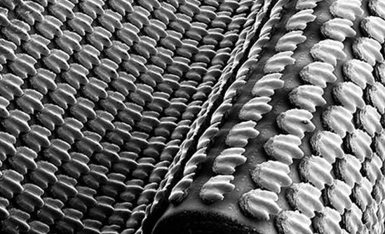 为什么鲤鱼的皮也可制革