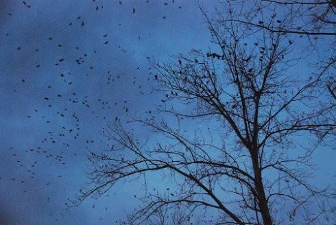 故宫为什么有很多乌鸦