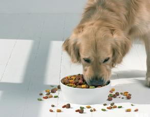 什么樣的狗糧好?優質狗糧的判斷