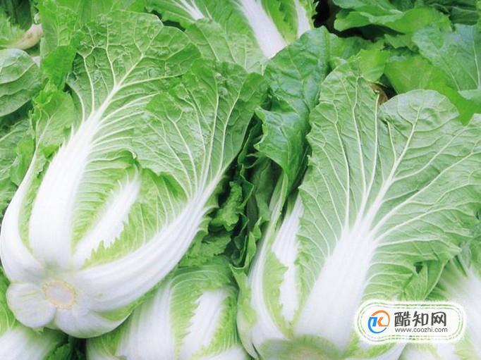 冬天吃什么蔬菜最好